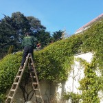 Garden clean ups and restoration