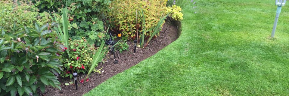Professional residential and commercial garden maintenance experts